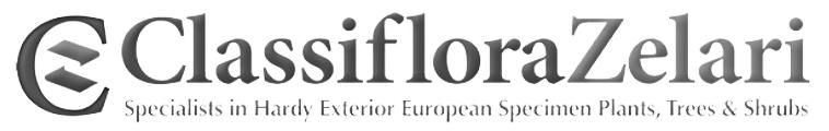 Classiflora logo