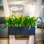 Thesley-High-Stand-by-Europlanters