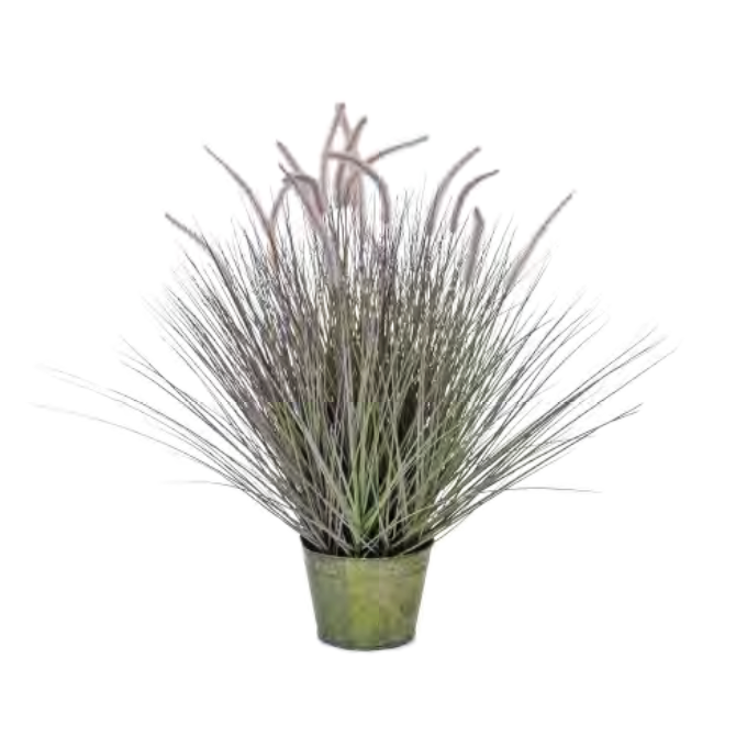 Dogtail Grass Bushy by Europlanters