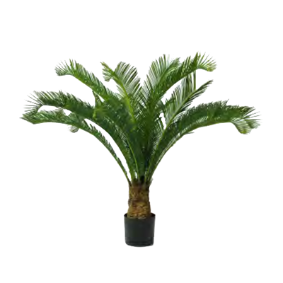 Cycas Palm by Europlanters