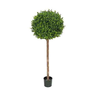 Buxus Ball Treel by Europlanters