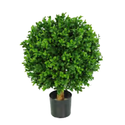 Buxus Ball by Europlanters