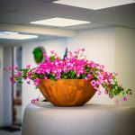 RUST-BOWL-by-Europlanters