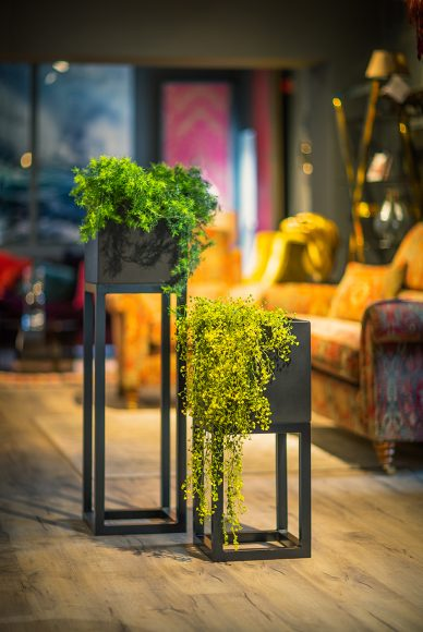 Oakley-Broad-Stand-Group-by-Europlanters