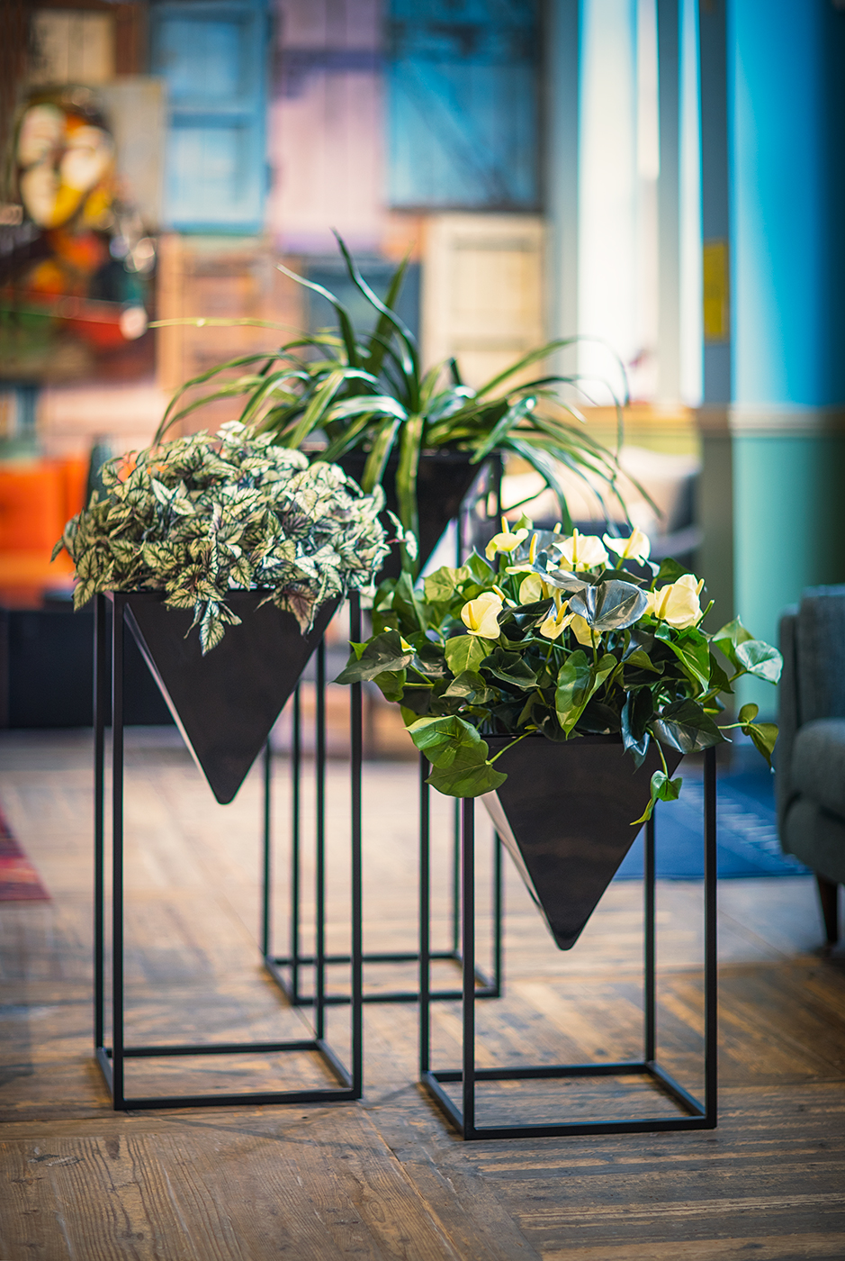Alderley-Stand-Group-by-Europlanters