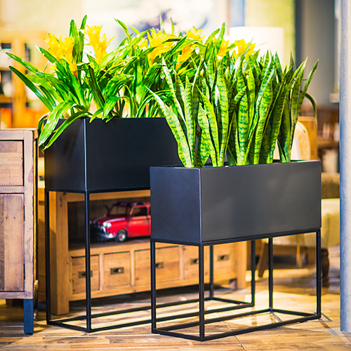Thesley-Group-by-Europlanters