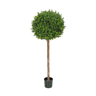 Buxus Ball Treel by Europlanters