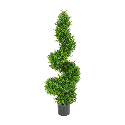 Buxus Spiral by Europlanters