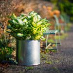 Galvanised-Circular-metal-planter-cylinder-by-europlanters
