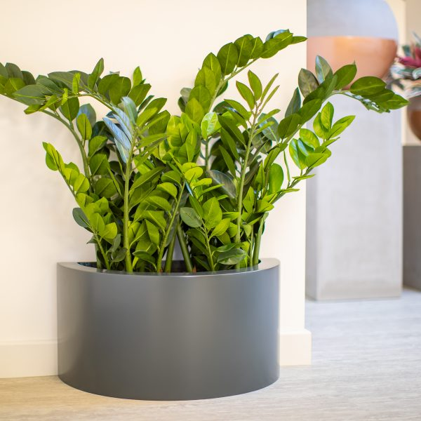 HALF-CYLINDER-PLANTER-BY-EUROPLANTERS
