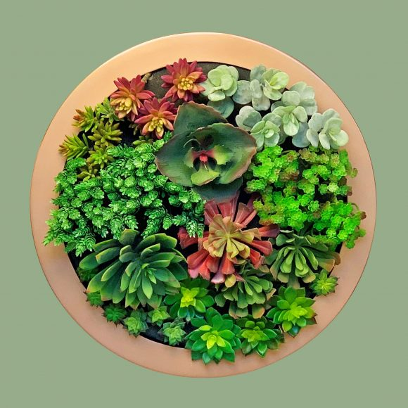 Porthole-Circular-wall-frame-planters-by-europlanters-large